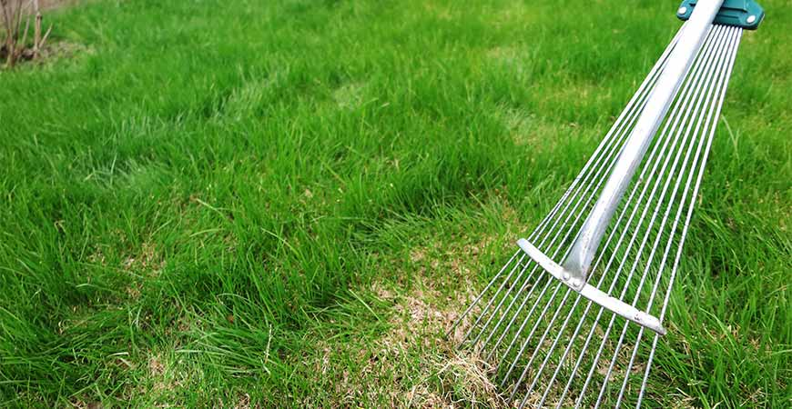 Dethatching for spring lawn renovation