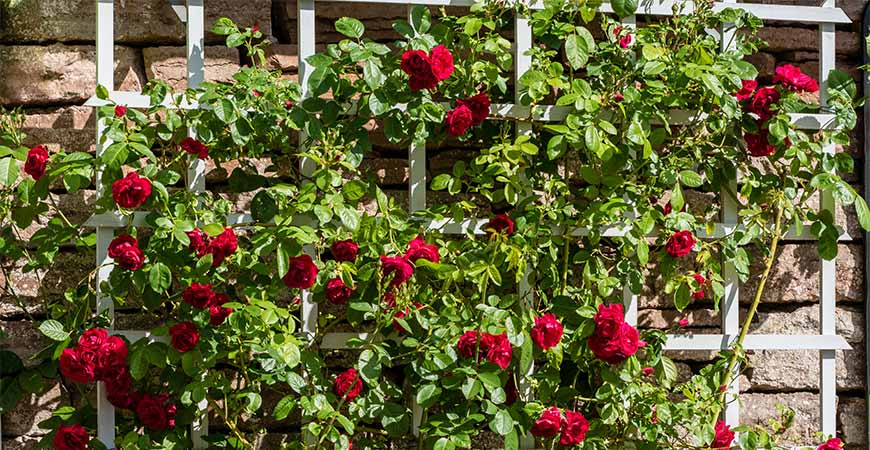 Ask Wet Forget Garden Trellis Ideas Types And Diys For The