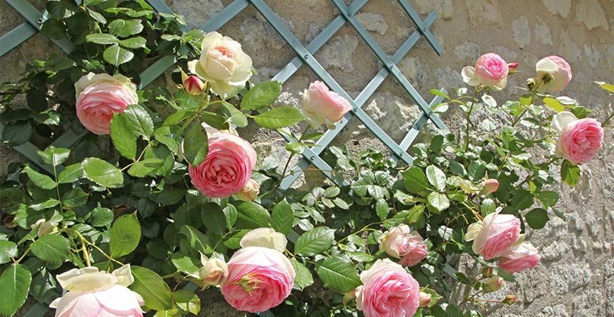 Try adding a trellis to your flower garden