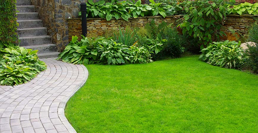 Transform Your Lawn with These Must-Have Maintenance Tips by Father's Day