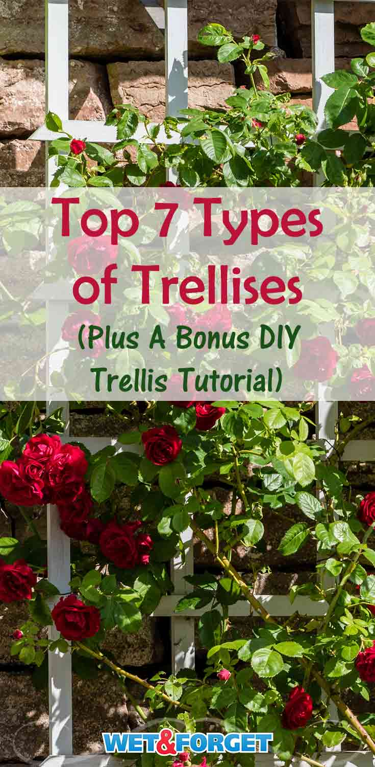 Discover which type of trellis is most suitable for your garden with our guide! Plus- learn how to make a DIY trellis!