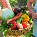 Harvesting Summer Vegetables: Tips and How-tos