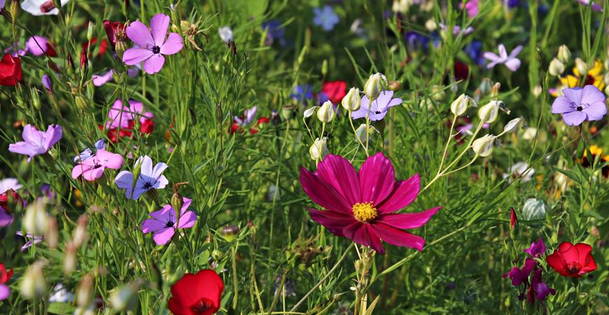 growing a wildflower garden