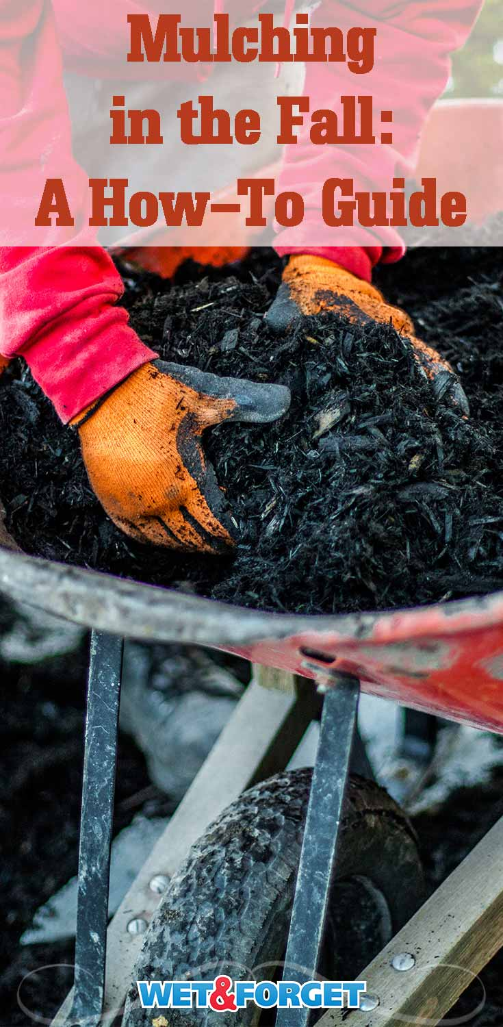 Discover the benefits of mulching in the fall with our how-to guide!