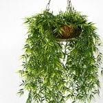 Top 10 Indoor Hanging Plants + Plant Care Tips