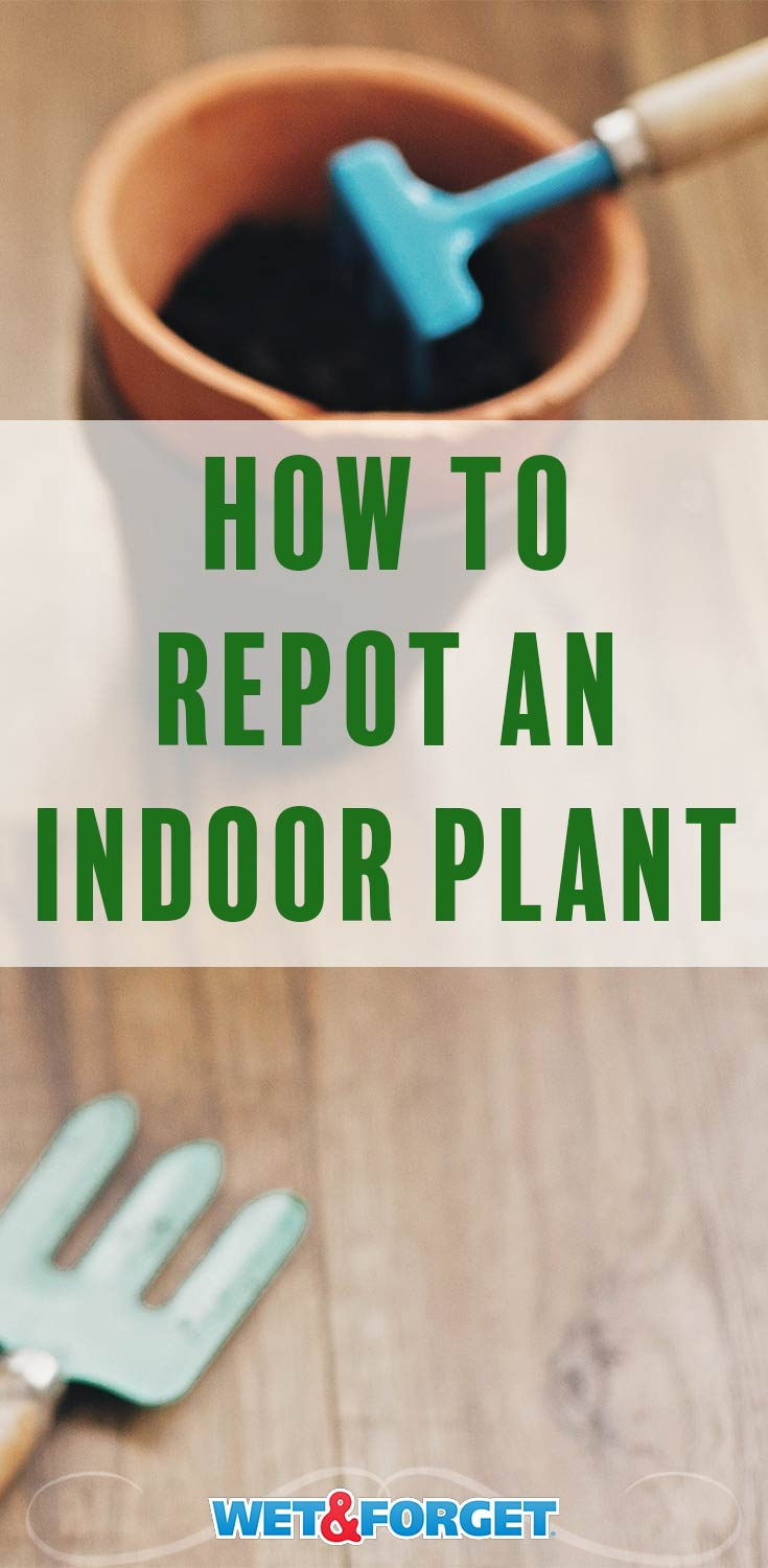 Find out when it's time to repot your indoor plant with our guide! Plus learn how to repot an indoor plant with our tutorial.