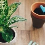 Repotting Indoor Plants: A How-To Guide