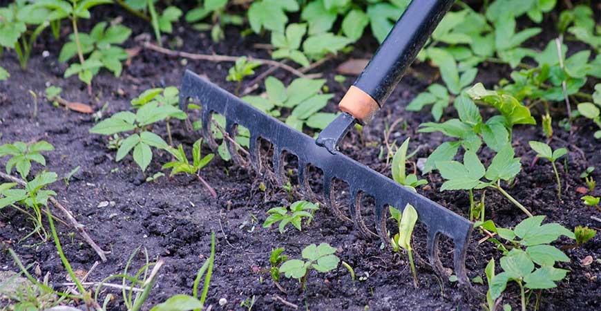 Raking your garden is a great way to burn extra calories.