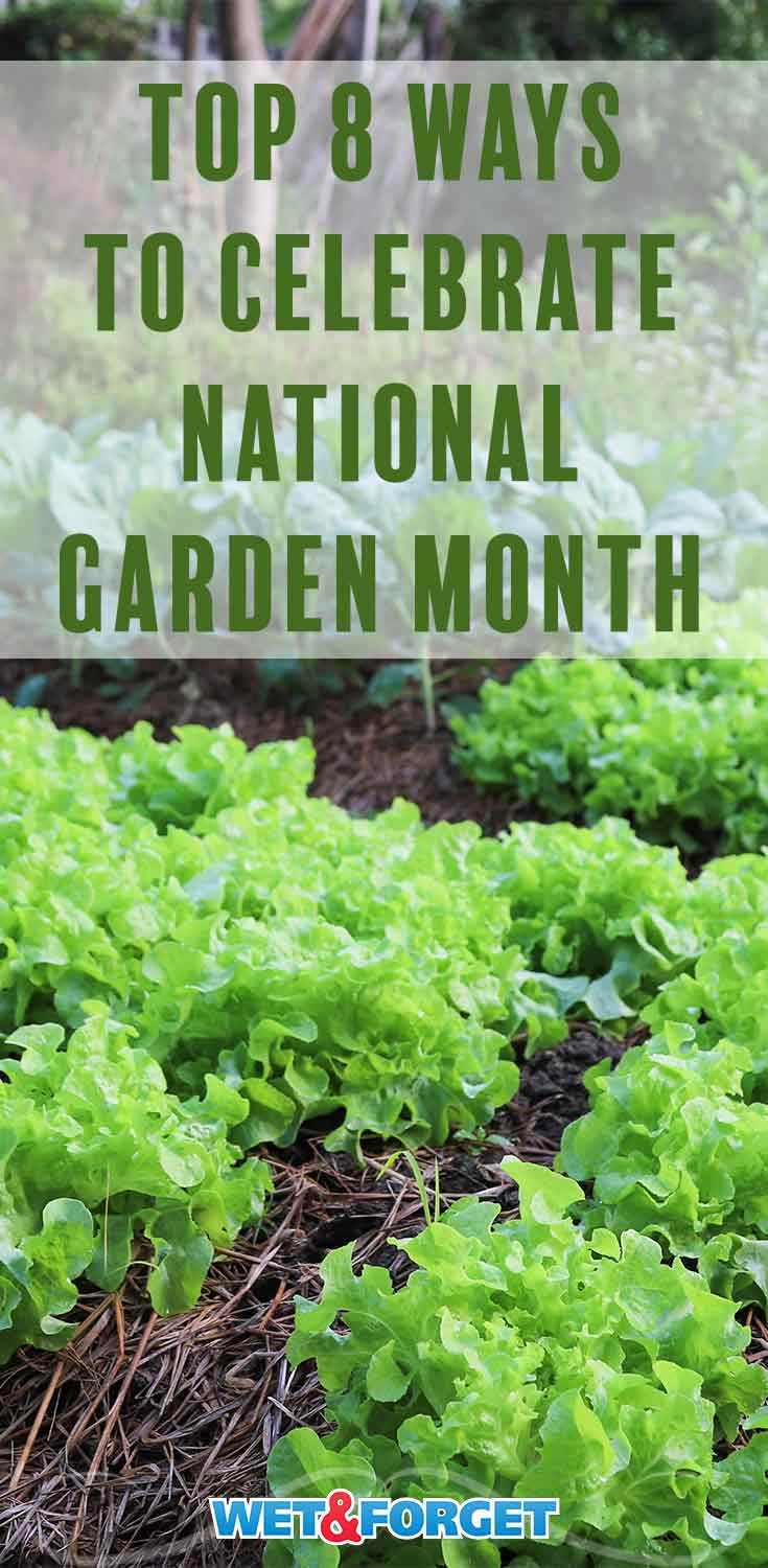 April is National Garden Month! Discover unique ways to celebrate with our guide!