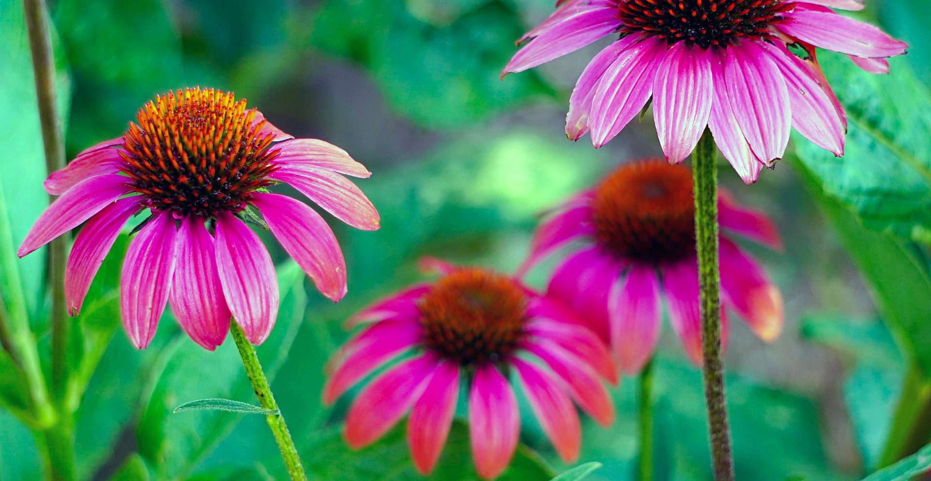 summer blooming flowers