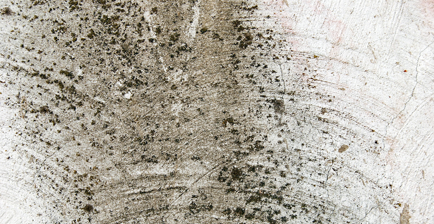 prevent basement mold growth with waterproofing