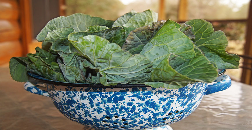 Start collard seeds 6-8 weeks before your first frost.