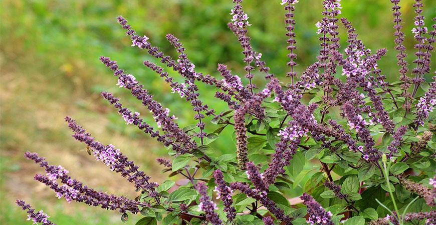 Salvias are the flowers to plant if you're trying to attract bees and butterflies.