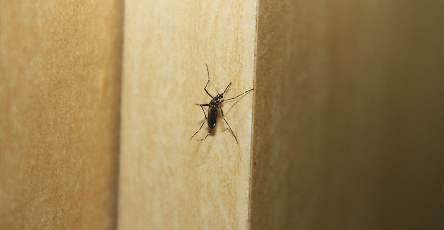 mosquitoes cause itchy bumps on skin
