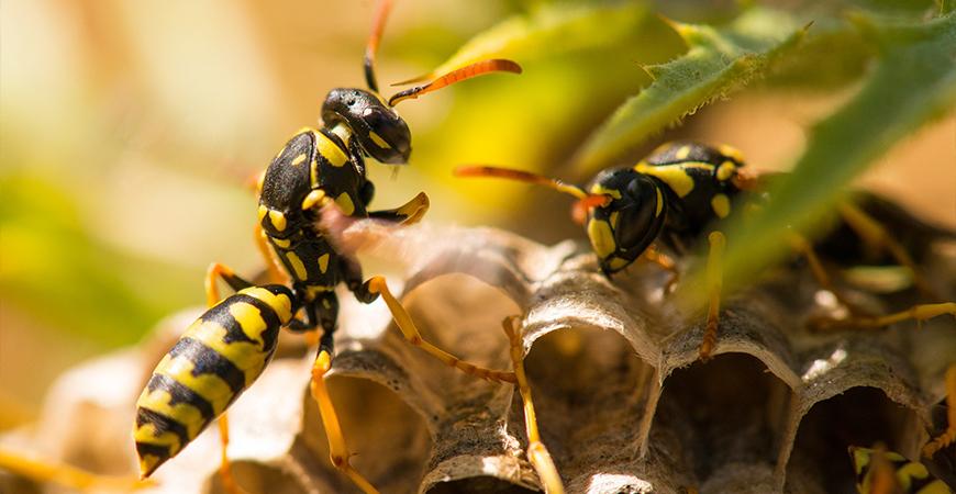 close up of 2 wasps