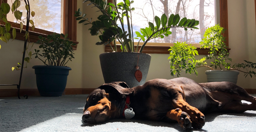 keep dogs safe with pet friendly plants in your home