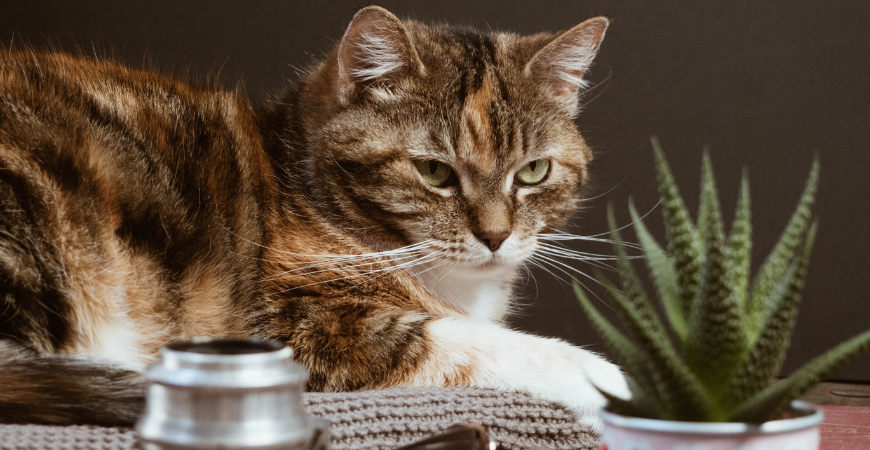 Keep cats and kittens safe with pet friendly plants