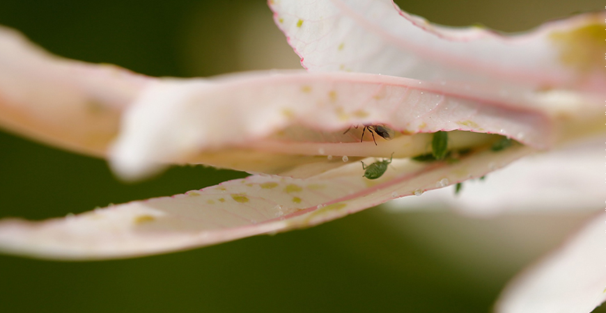 eliminate common plant pests before transporting them inside