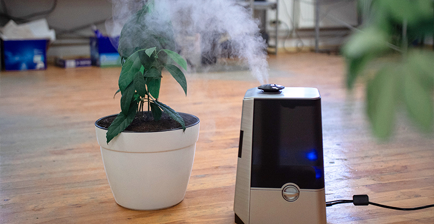 place a humidifier near your plant