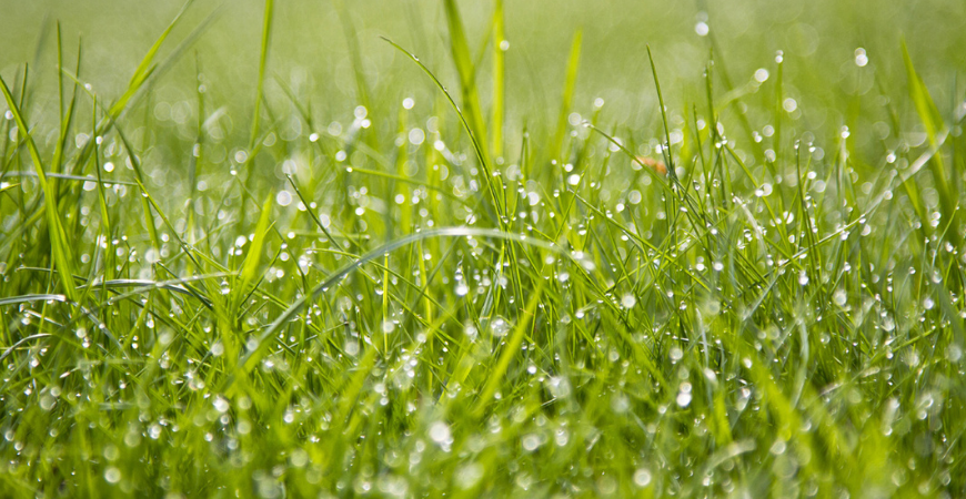Watering grass seeds