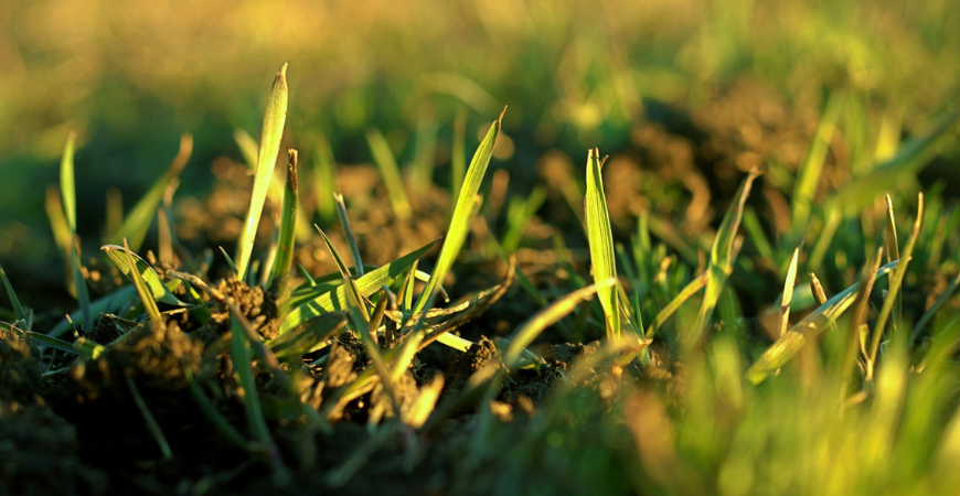 Soil prep for growing grass seed