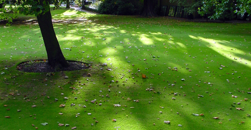 planting grass seed in fall