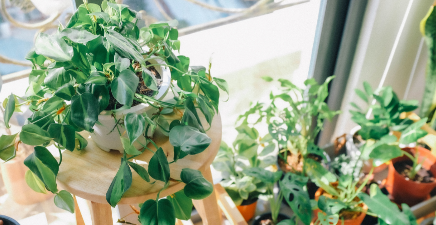 potted plants inside home