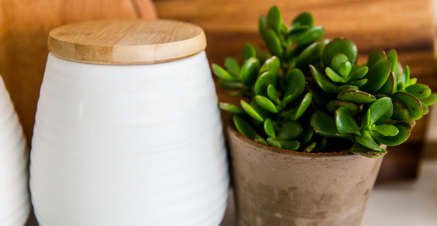 gift jade plants as a new year's plant gift