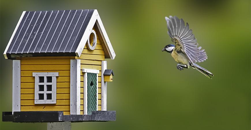 Chickadee flying towards birdhouse