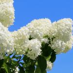 Best Drought Tolerant Plants for a Lush Summer Garden