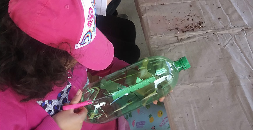 DIY birdhouse made with a pop bottle.