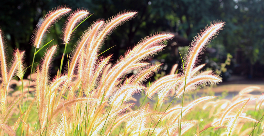 drought tolerant flowering plants