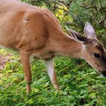 6 Ways to Protect Your Garden From Animals